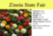 Zinnia State Fair.jpg