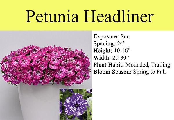 Petunia Headliner.jpg