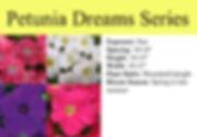 Petunia Dreams.jpg