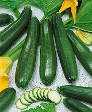 Zucchini, Summer Squash Zucchini Elite.j