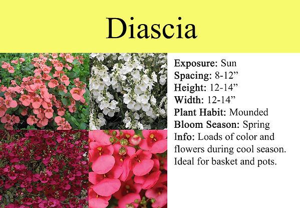 Diascia.jpg