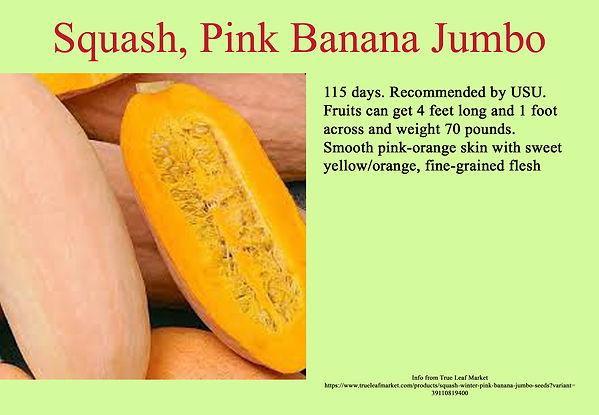 Squash, Pink Banana Jumbo.jpg