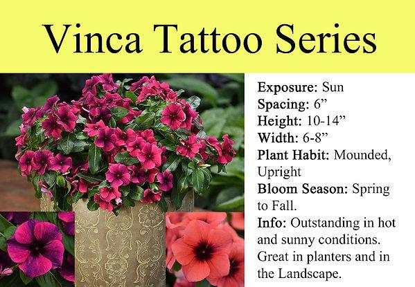 Vinca Tattoo Series.jpg