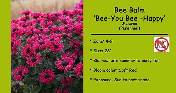 Monarda Bee Balm Bee You Bee Happy.jpg