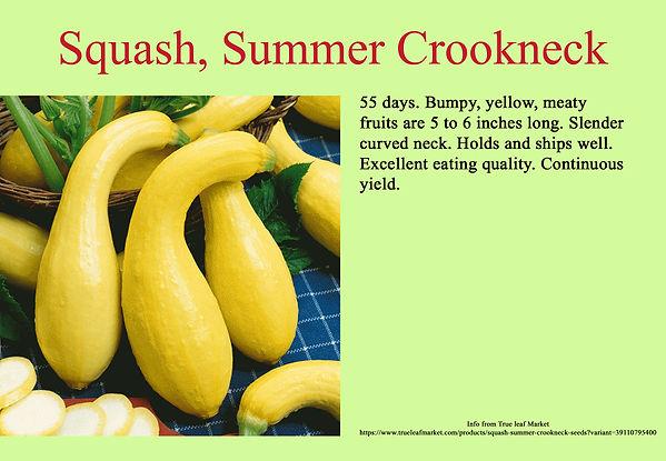 Squash, Summer Crookneck.jpg