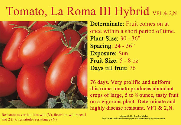 Tomato, La Roma III Hybrid.jpg