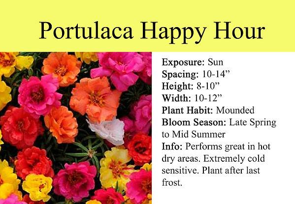Portulaca Happy Hour.jpg