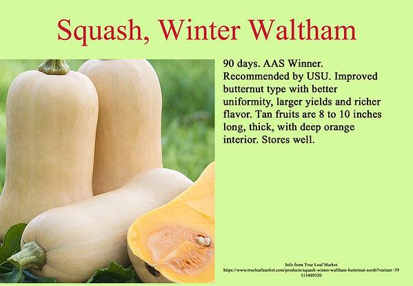 Squash, Winter Waltham Butternut.jpg