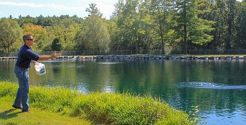 pond water treatment pellets
