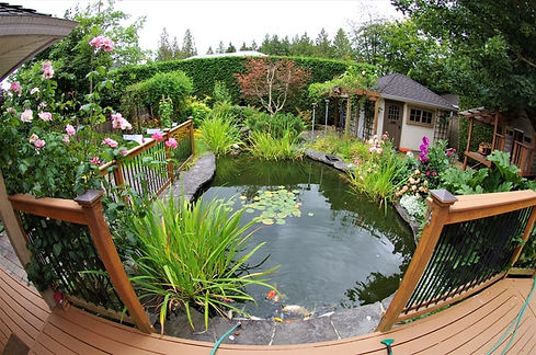 backyard pond with water plants