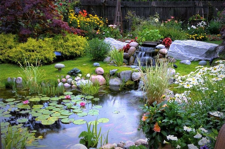 backyard pond landscape