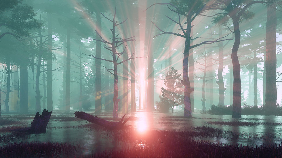 sunset-rays-in-swampy-forest-at-misty-da