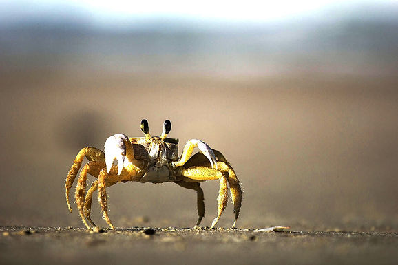 On-page-crawlible-Crab_felipe-portella (