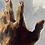 "Thumbnail: ""reaching hand"""