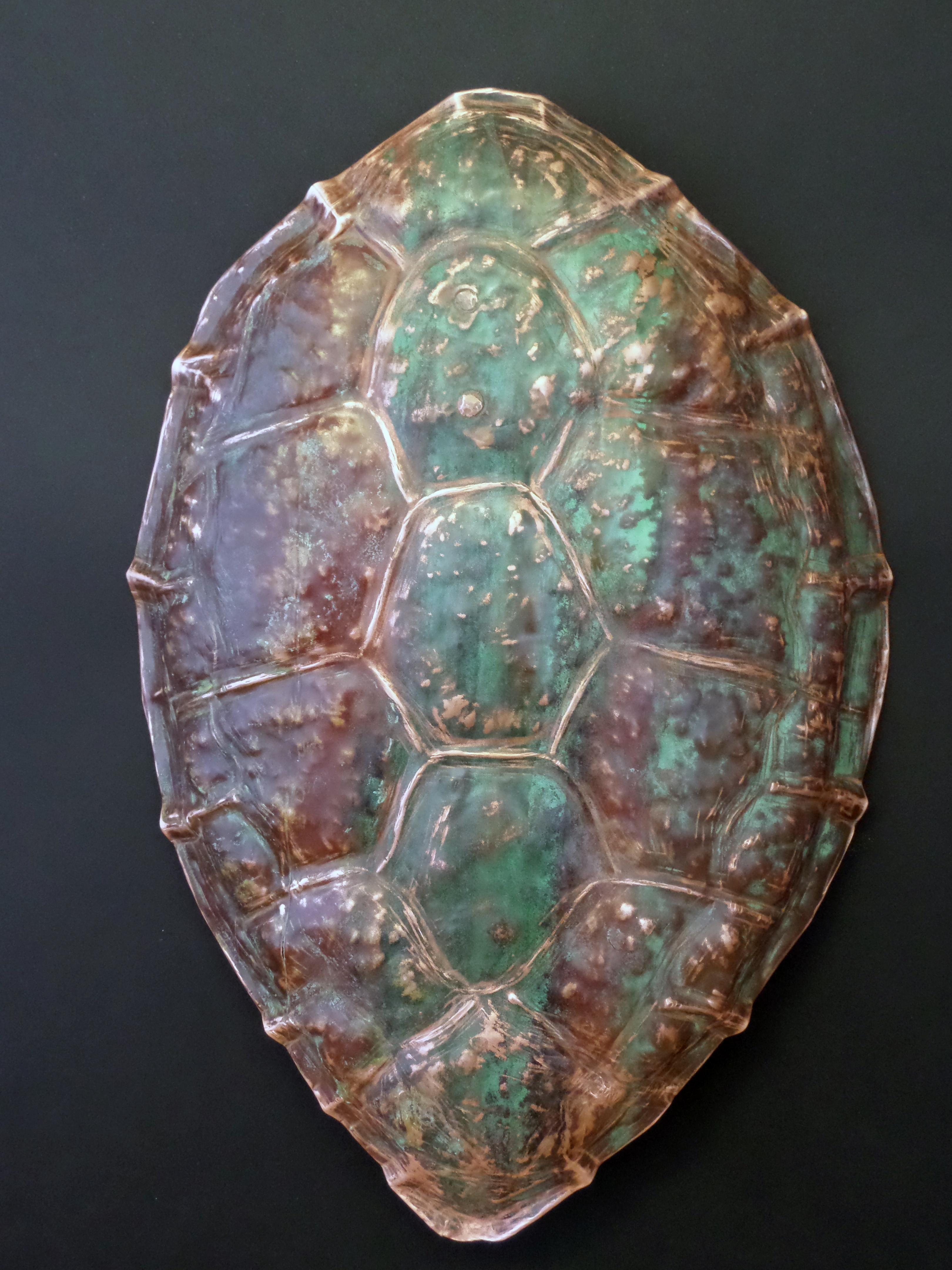 Sea Turtle Carapace