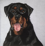 Needle felt pet portrait, Rotweiller
