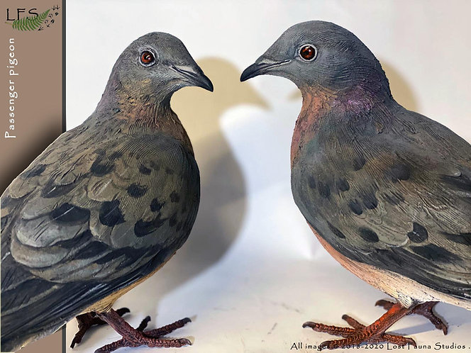 Passenger pigeon (pair)