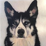 Needle felt pet portrait