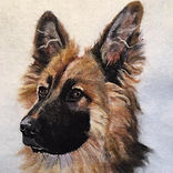 Needle felt pet portrait German Shepherd