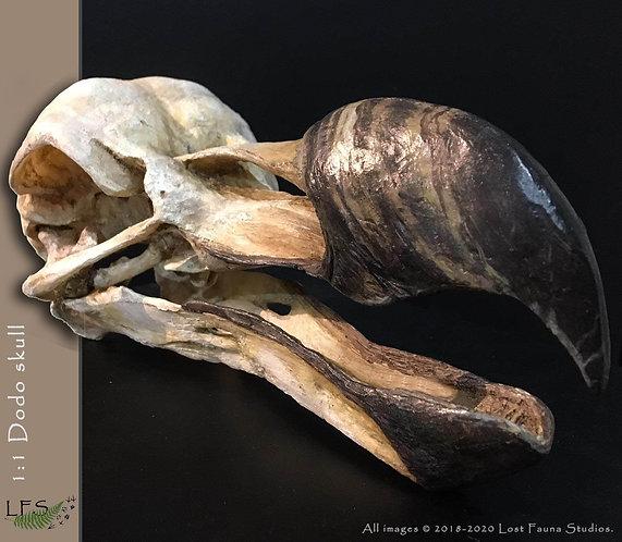 Dodo skull