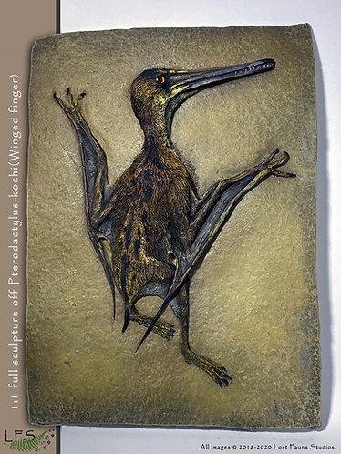 Pterodactylus-kochi