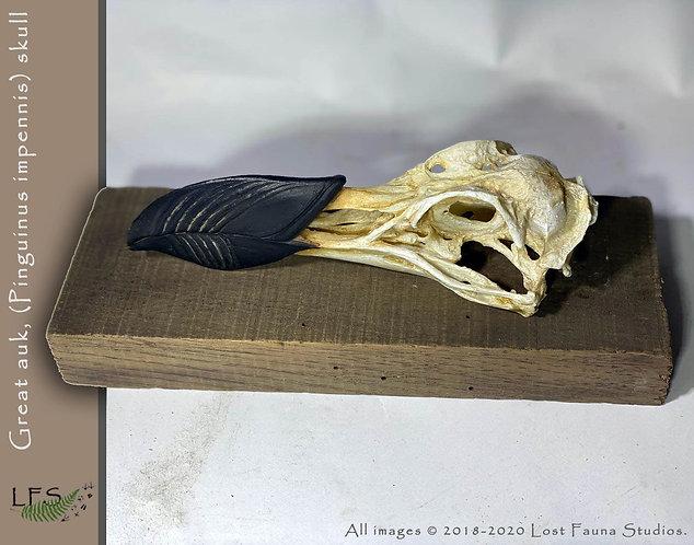 Great Auk skull