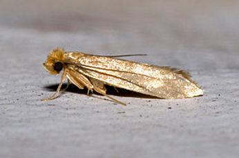 Mite insecte.jpg