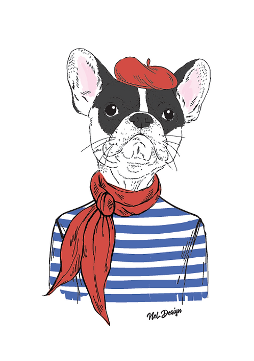 French Frenchie