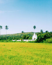 Saligao-paddy-fields-goa.jpg