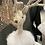 Thumbnail: Reindeer In Tutu