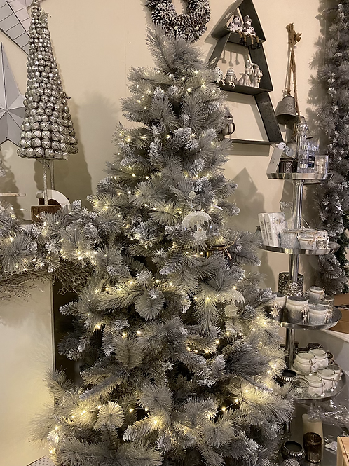 Silver Tipped Grey Tree 2.1m