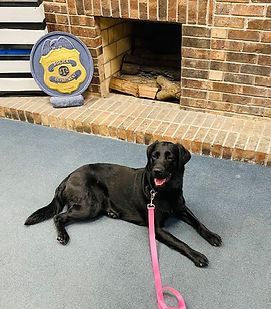 K9 Lola relaxing at Kearney Police Depar
