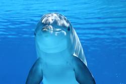 dolphin-203875