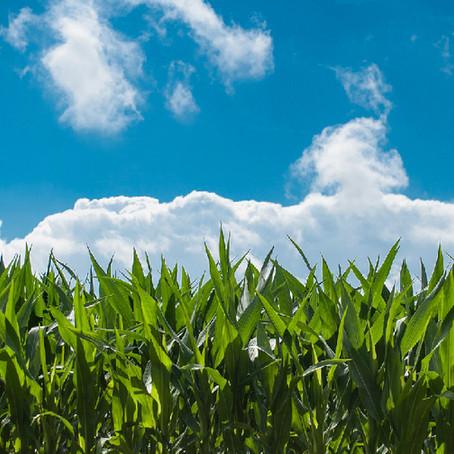 Climat des affaires agricoles en Afrique: Que faut-il retenir du rapport de la banque mondiale ?