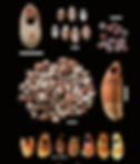 Early-Neolithic-ornaments-from-the-Galer