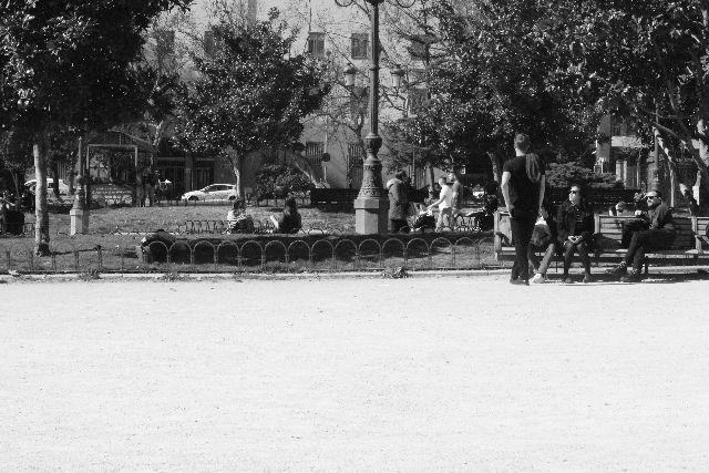 black and white, tree, snapshot, monochrome photography כיכר, עצים, תצלום שחור לבן