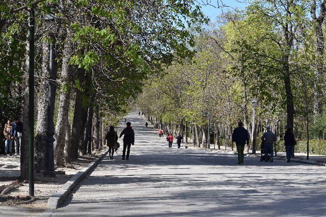 פארק, אנשים הולכים בפארק, עצים, botany, trail, tree, natural enviroment