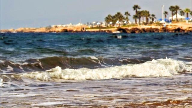 חוף ים - מים וברקע חוף עם דקלים