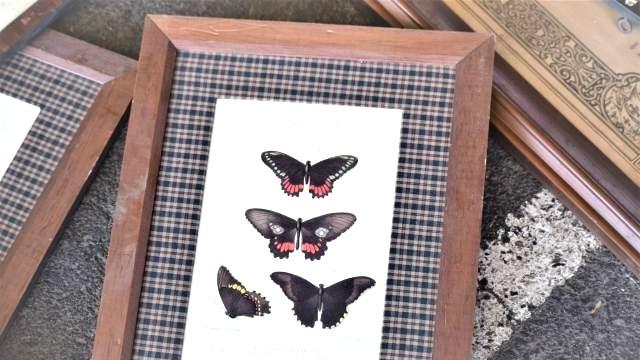תמונה של פרפרים