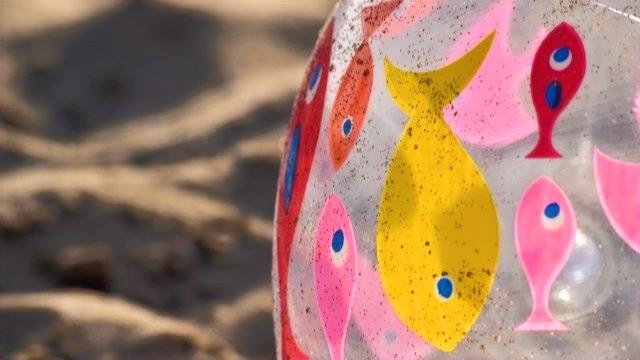 כדור ים על חוף הים