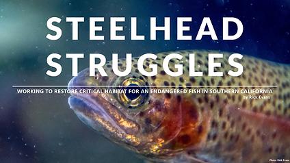 Steelhead Struggles, Southern California, Wildlife, Conservation, Trout
