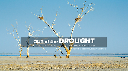 California Drought Wildlife Conservation