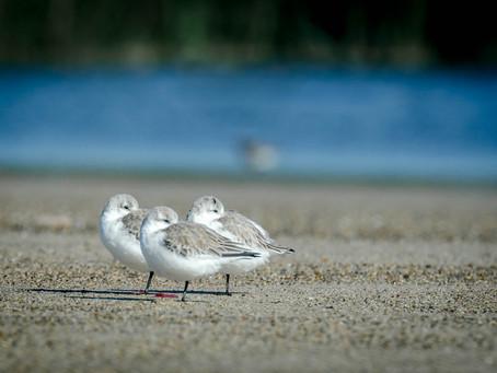 The Southern California Coast Provides Critical Habitat for Imperiled Birds