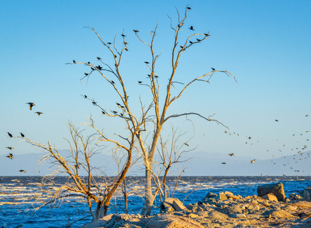 Could California be on the Brink of Solving the Environmental Crisis at the Salton Sea?