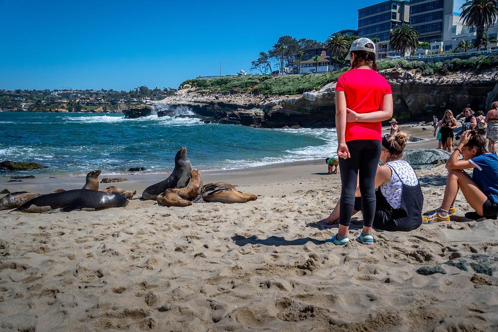La Jolla, California, tourism, sea lions, wildlife