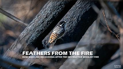 Birds recover after wildfire. Woolsey Fire Malibu Audubon Malibu Creek State Park. Wildlife conservation