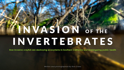 Invasive crayfish removal. Mountains Restoration Trust Wildlife Conservation