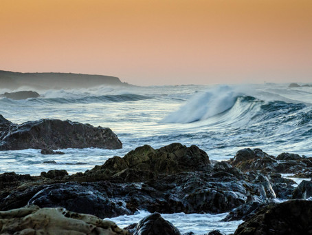New Marine Heatwave has Scientists Concerned as it Threatens Wildlife and Coastal Communities