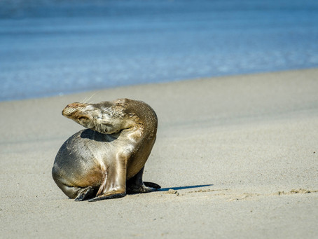 Rescuing Wildlife at the Pacific Marine Mammal Center