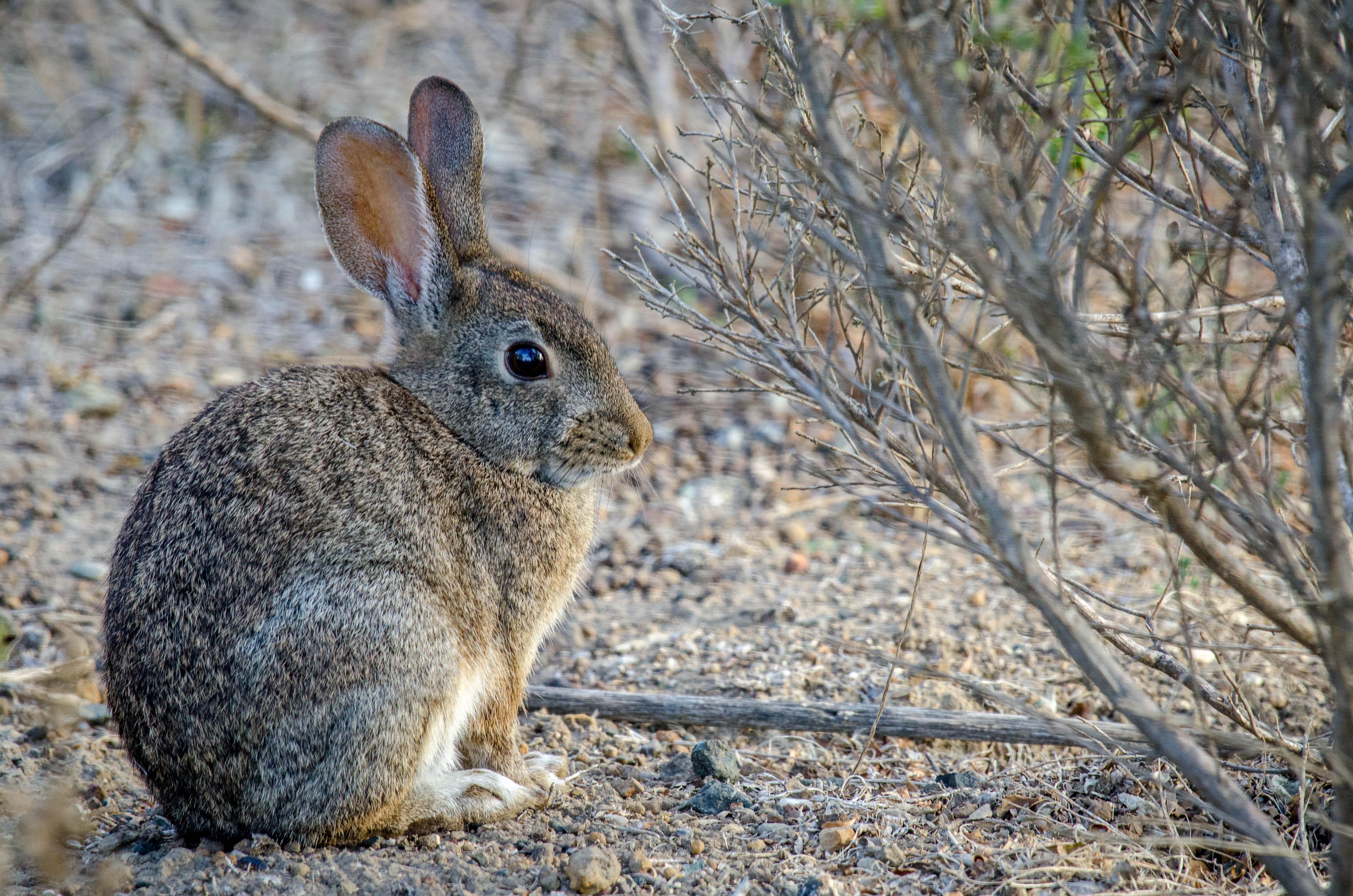 Brush Rabbit 2